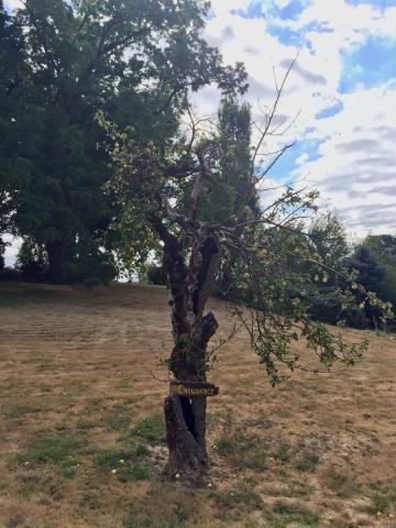 Old Tree endures