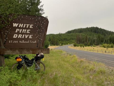 White Pine Drive